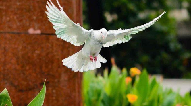 鳩の驚くべき生態&おしどり夫婦の真実。