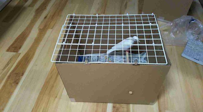 1000円以下で簡単に作れる、大型鳥用ケージ。